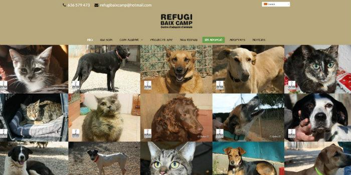Refugibaixcamp1
